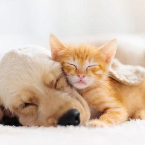 Colostrum für Haustiere
